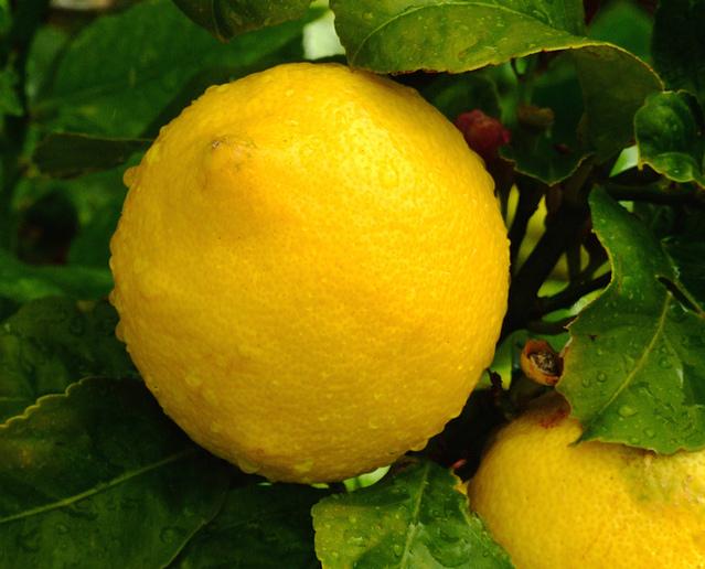 lemons-1182337-639x515